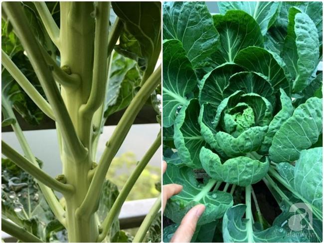 Khu vườn vỏn vẻn 5m² trên ban công nhà phố nhưng như một trang trại rau quả sạch giữa lòng Thủ Đô - Ảnh 23.