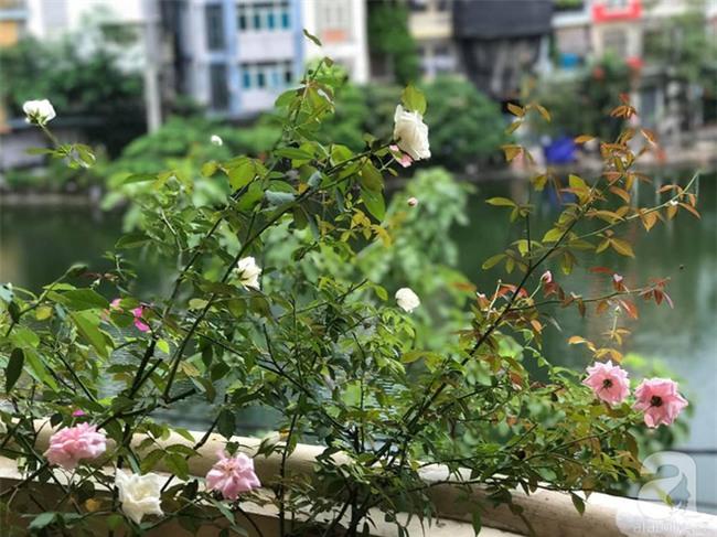 Khu vườn vỏn vẻn 5m² trên ban công nhà phố nhưng như một trang trại rau quả sạch giữa lòng Thủ Đô - Ảnh 29.