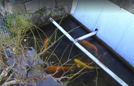 Người Nhật khiến cả thế giới thán phục vì rửa bát, rửa rau ngay ở kênh nuôi cá - Ảnh 2.