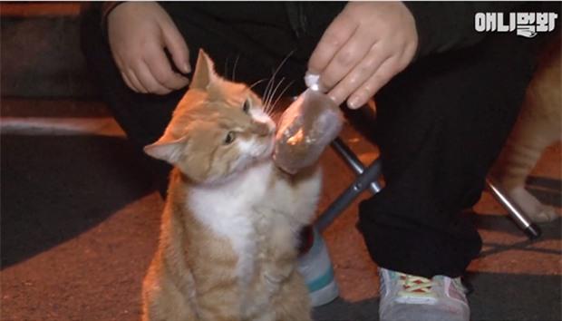Bày sẵn không cần, nhưng cho đồ ăn vào túi lại tha đi và lý do xúc động của cô mèo hoang - Ảnh 2.