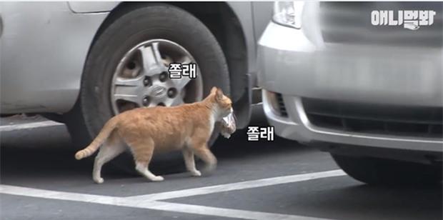 Bày sẵn không cần, nhưng cho đồ ăn vào túi lại tha đi và lý do xúc động của cô mèo hoang - Ảnh 3.