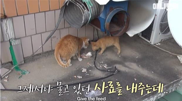 Bày sẵn không cần, nhưng cho đồ ăn vào túi lại tha đi và lý do xúc động của cô mèo hoang - Ảnh 4.