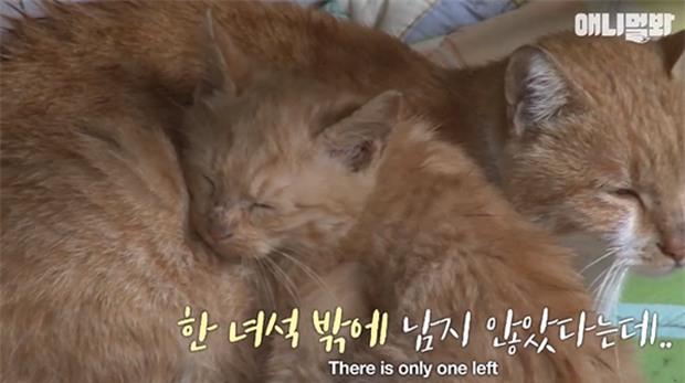 Bày sẵn không cần, nhưng cho đồ ăn vào túi lại tha đi và lý do xúc động của cô mèo hoang - Ảnh 5.
