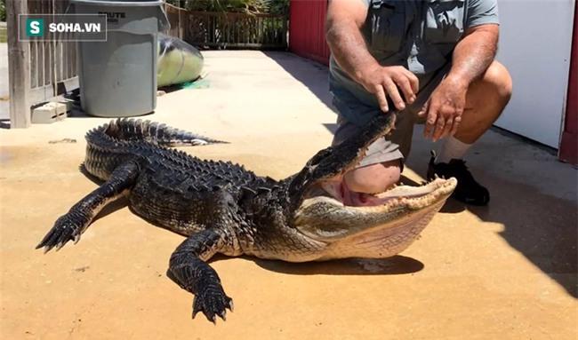 Bị cá sấu ngoạm chặt chân, trong lúc nguy cấp, bé 10 tuổi tự cứu mình theo cách thông minh - Ảnh 1.