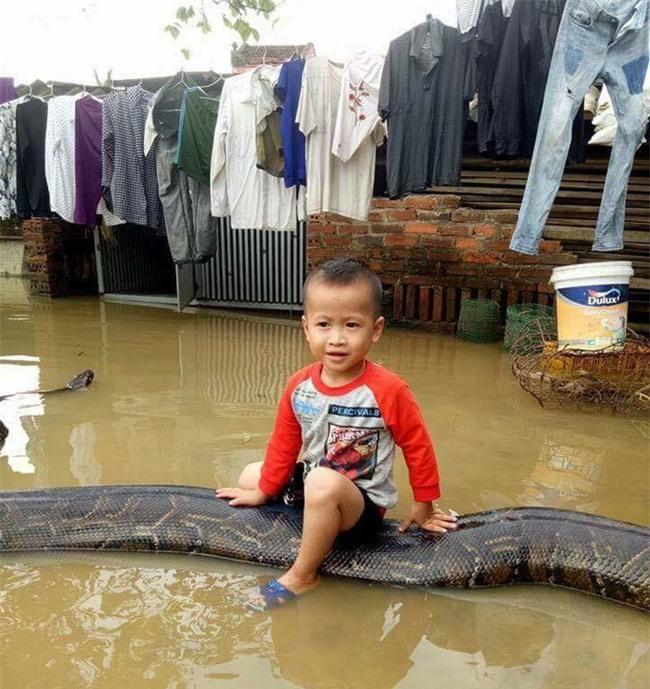 Clip sốc: Bé trai chơi đùa cùng trăn khổng lồ trong sân nhà ngập nước sau lũ - Ảnh 1.