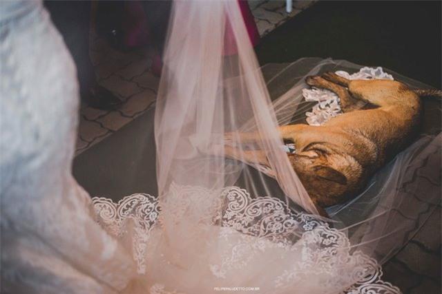 """""""Vị khách"""" lạ ngang nhiên vào ngủ giữa lễ cưới, cô dâu chú rể không đuổi đi mà còn làm điều bất ngờ - Ảnh 4."""