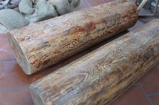 thủy tùng,cây cổ thụ,gỗ quý