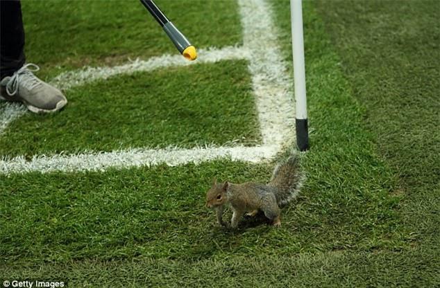 Chú sóc bướng bỉnh gây náo loạn trước trận đấu của Man City - Ảnh 1.
