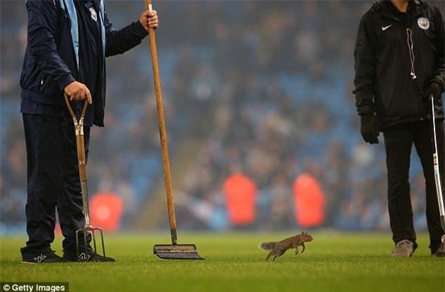 Chú sóc bướng bỉnh gây náo loạn trước trận đấu của Man City - Ảnh 2.