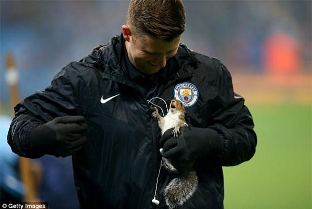Chú sóc bướng bỉnh gây náo loạn trước trận đấu của Man City - Ảnh 5.