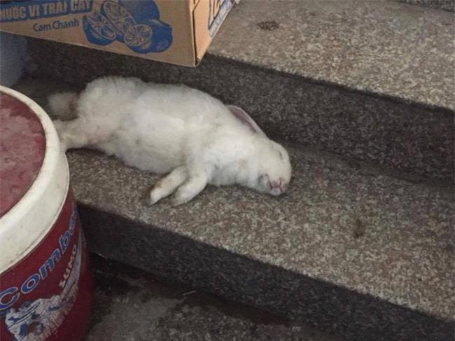 Nuôi phải chú thỏ cầm tinh con chó, khổ chủ uất ức lên mạng rao sang nhượng - Ảnh 6.