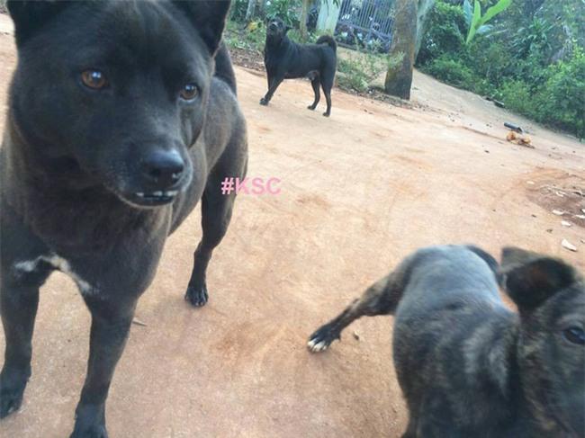 Chú chó bỗng gây sốt mạng xã hội Việt và đây là điểm đặc biệt - Ảnh 3.