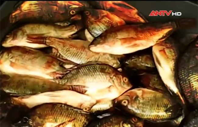 Chợ nào chả có cá chết và sự thật đằng sau những bát bún cá, chả cá thơm lừng mê hoặc - Ảnh 1.