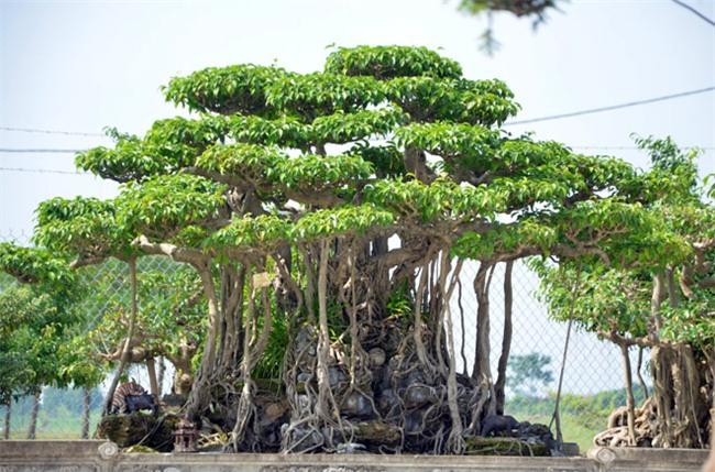 khoai lang,đặc sản nhà giàu,Iphone X,giá ô tô,hồng Đà Lạt,dừa Xiêm,cá quý hiếm,thủy quái,cây cảnh,cây cổ thụ,cua biển