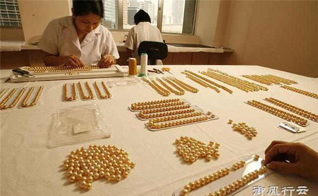 Ngọc trai vàng: Giá gần 14 triệu/gram, nuôi 2-5 năm mới đủ lớn