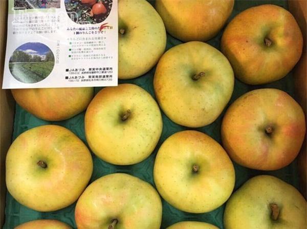 Táo Orin mùa thu Nhật Bản khiến nhiều chị em yêu thích vì mùi thơm nồng như sữa