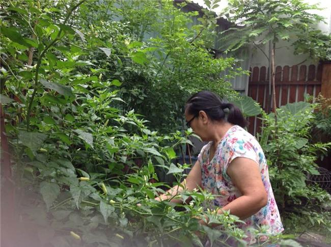 Cuộc sống nông dân giản dị vô cùng viên mãn của bố mẹ đẻ Tăng Thanh Hà-3