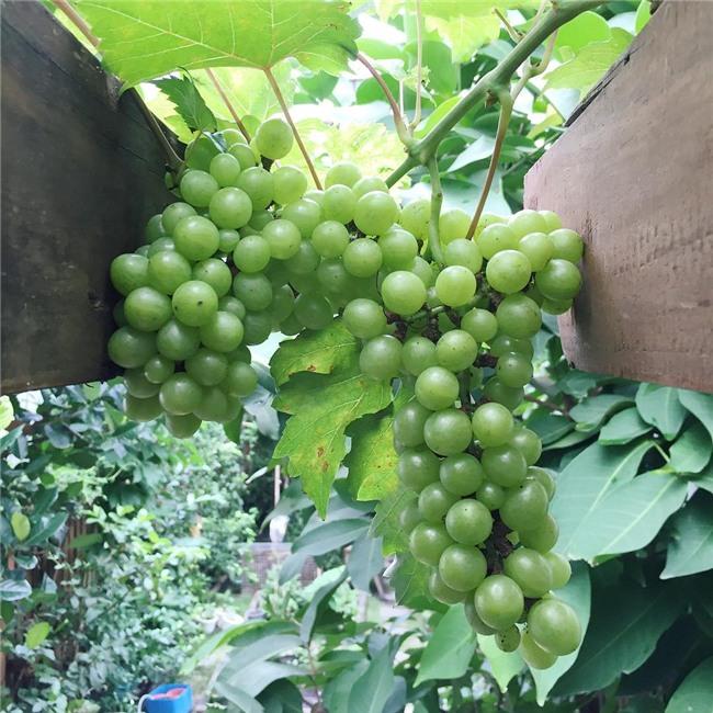 Cuộc sống nông dân giản dị vô cùng viên mãn của bố mẹ đẻ Tăng Thanh Hà-9