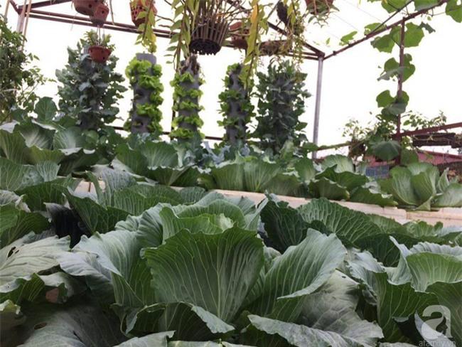 Mê mẩn vườn rau xanh mướt trên sân thượng 40m² với chi phí 7 triệu đồng của người chồng chiều vợ - Ảnh 4.