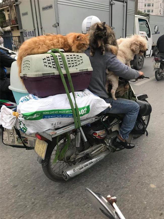 Chủ đi làm, cả đàn chó mèo đánh đu trên xe máy đi cùng cho vui - Ảnh 1.