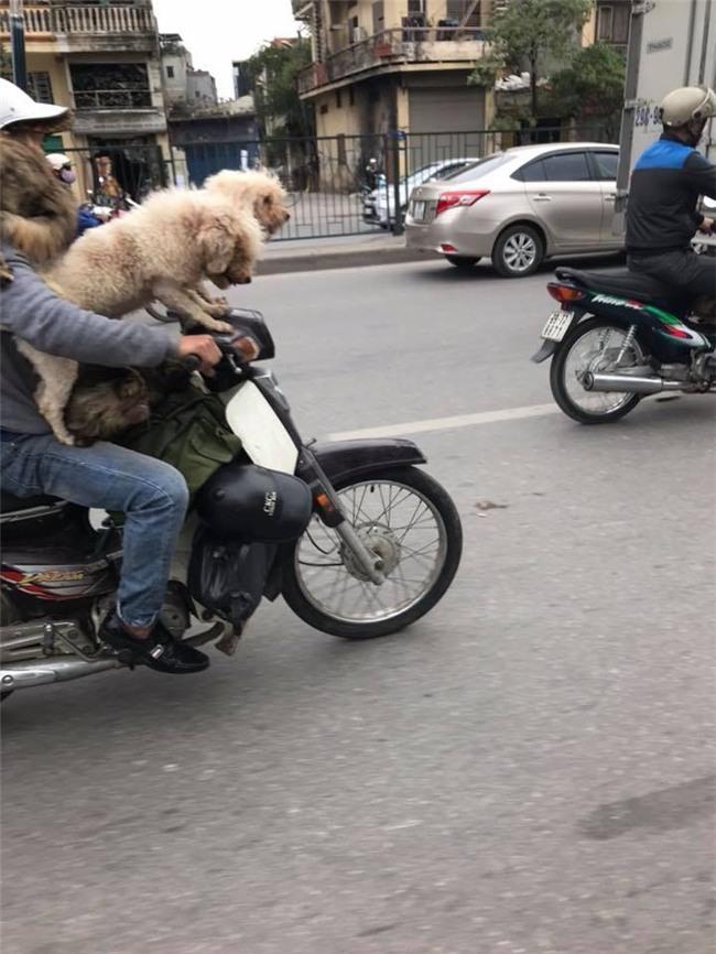 Chủ đi làm, cả đàn chó mèo đánh đu trên xe máy đi cùng cho vui - Ảnh 2.