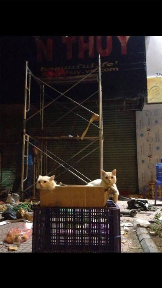 Chủ đi làm, cả đàn chó mèo đánh đu trên xe máy đi cùng cho vui - Ảnh 4.