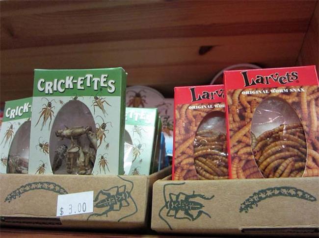 5 món ăn quen thuộc bỗng trở thành kinh dị khi làm từ côn trùng - Ảnh 3.