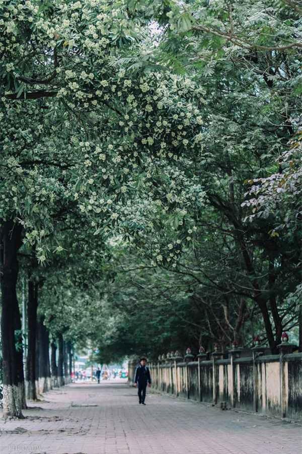 Bị hoa sữa hành hạ, cư dân mạng than khóc người trồng không hiểu ý thơ ca - Ảnh 1.