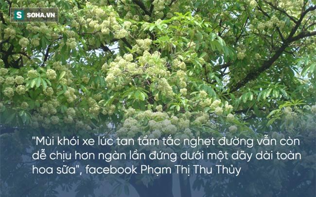 Bị hoa sữa hành hạ, cư dân mạng than khóc người trồng không hiểu ý thơ ca - Ảnh 4.
