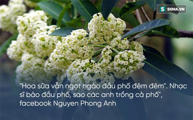 Bị hoa sữa hành hạ, cư dân mạng than khóc người trồng không hiểu ý thơ ca - Ảnh 6.