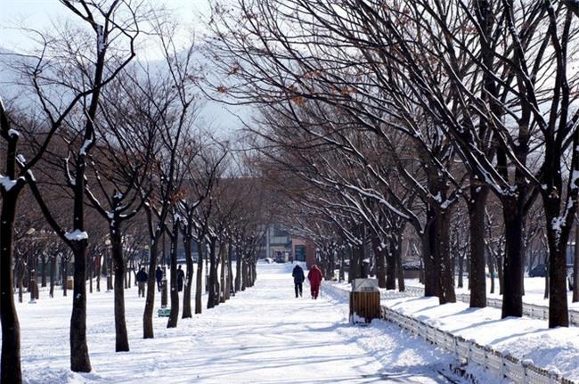 Ngất ngây với những hình ảnh tuyết rơi đẹp lung linh trên khắp thế giới - Ảnh 1.
