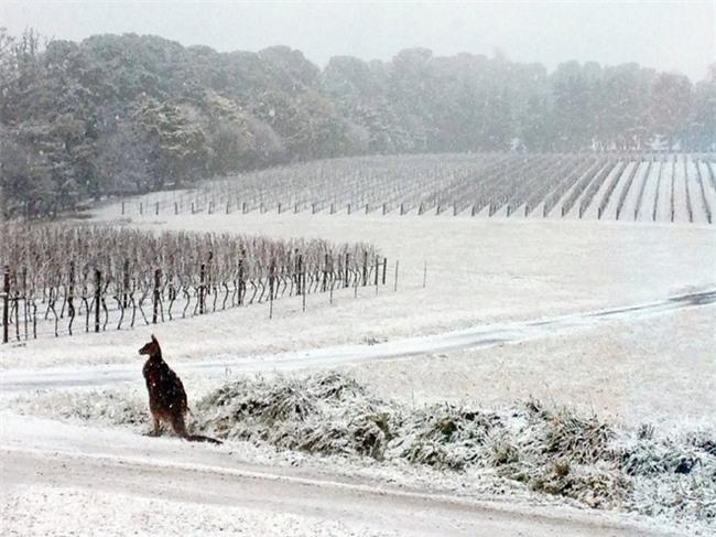 Ngất ngây với những hình ảnh tuyết rơi đẹp lung linh trên khắp thế giới - Ảnh 33.