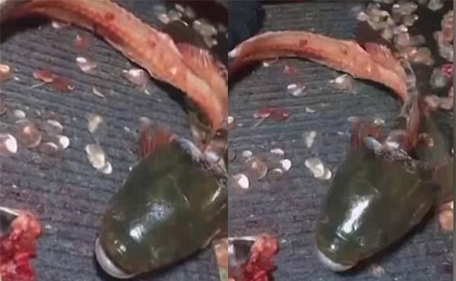 Đoạn video gây tranh cãi: Cá bị lọc hết thịt chỉ còn phần đầu vẫn thở thoi thóp - Ảnh 2.