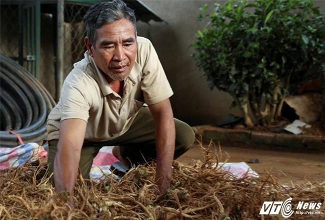 tỷ phú nông dân,nông dân làm giàu,dược liệu