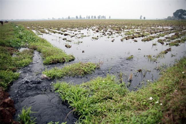 Hà Nội: Nước ô nhiễm nặng, bốc mùi nồng nặc vẫn phải bơm lên tưới cho hoa màu - Ảnh 13.