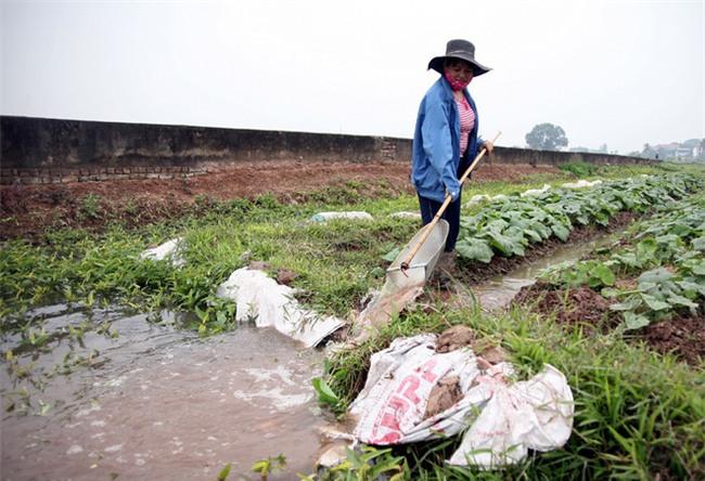 Hà Nội: Nước ô nhiễm nặng, bốc mùi nồng nặc vẫn phải bơm lên tưới cho hoa màu - Ảnh 14.