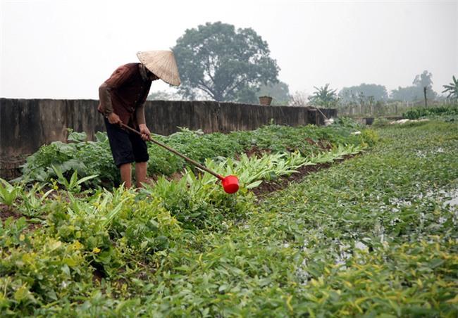 Hà Nội: Nước ô nhiễm nặng, bốc mùi nồng nặc vẫn phải bơm lên tưới cho hoa màu - Ảnh 15.