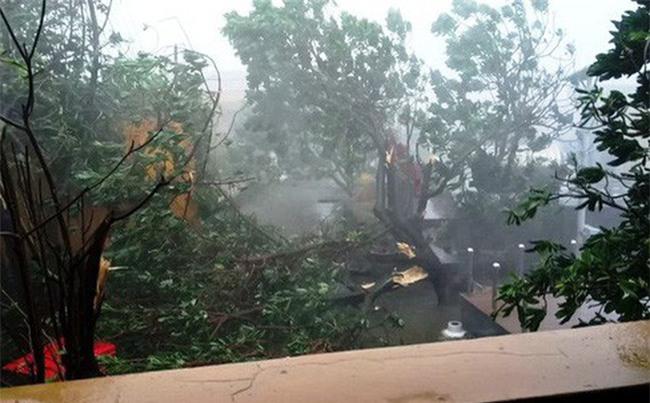 Bão Tembin càn quét ở Trường Sa, cây đổ rạp, hàng loạt tấm pin mặt trời bị cuốn mất
