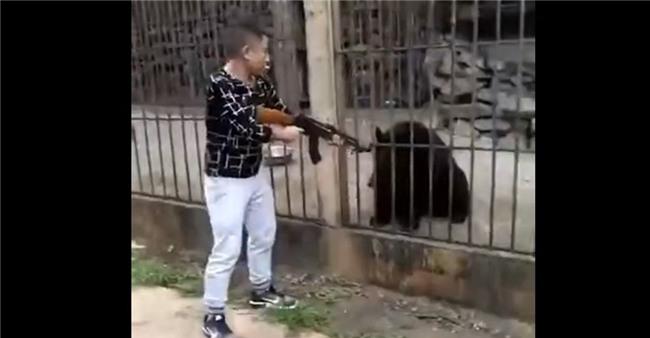 Người đàn ông giương súng bắn chết gấu đen bị nhốt trong lồng gây phẫn nộ cộng đồng mạng Trung Quốc - Ảnh 3.