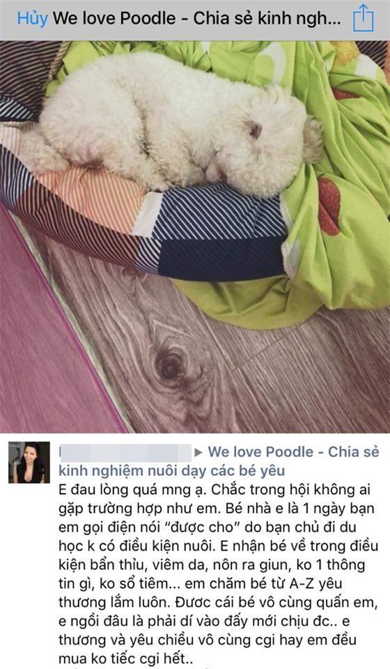 Cưu mang chú chó từ khi nó ốm nặng, cô gái đau lòng trả lại vì chủ cũ thấy đẹp bỗng đòi - Ảnh 1.
