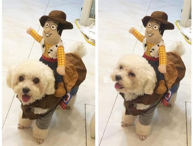Cưu mang chú chó từ khi nó ốm nặng, cô gái đau lòng trả lại vì chủ cũ thấy đẹp bỗng đòi - Ảnh 2.