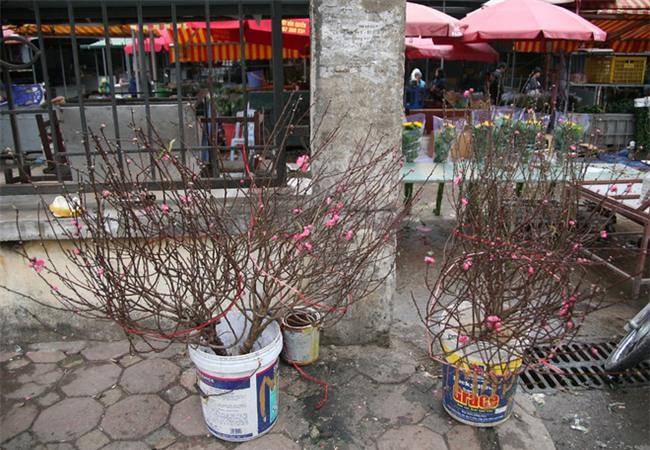 450 ngàn đồng/cành đào nở sớm, người Hà Nội mua chơi Tết Dương lịch - Ảnh 3.