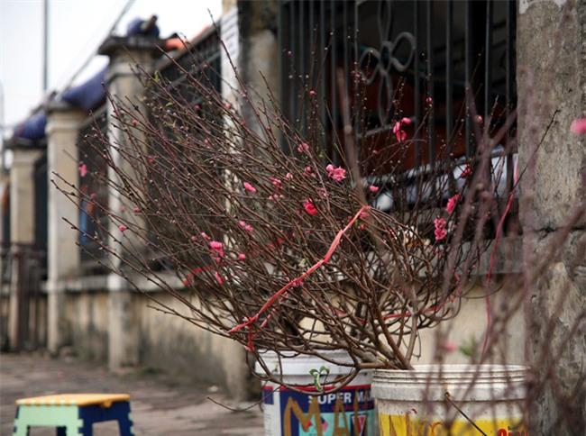 450 ngàn đồng/cành đào nở sớm, người Hà Nội mua chơi Tết Dương lịch - Ảnh 4.