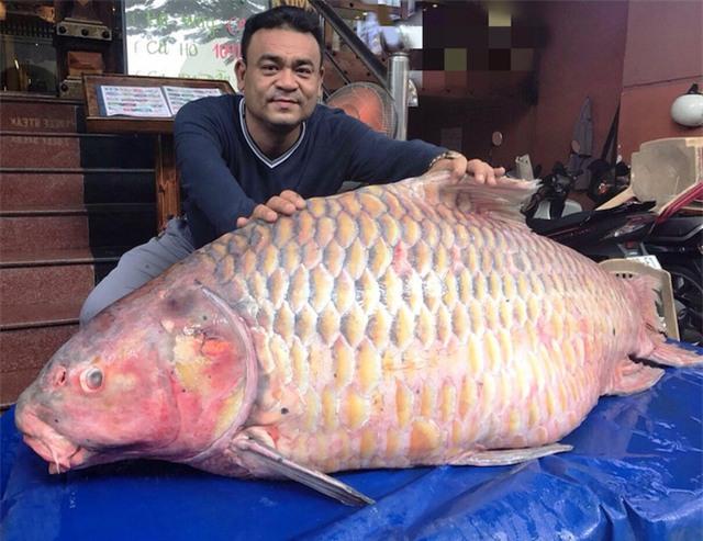 cá hô,hải sản,thủy quái,đặc sản nhà giàu,cá khủng