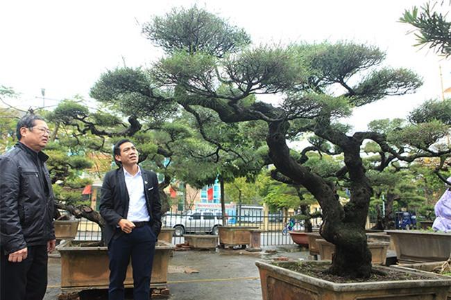cây cổ thụ,cây cảnh tiền tỷ,cây cảnh,chơi cây