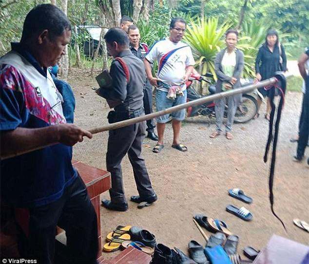 Mở cửa phòng cháu gái, cụ bà đau đớn khi thấy đứa cháu 9 tuổi bị rắn hổ mang lẻn vào cắn chết từ bao giờ - Ảnh 4.