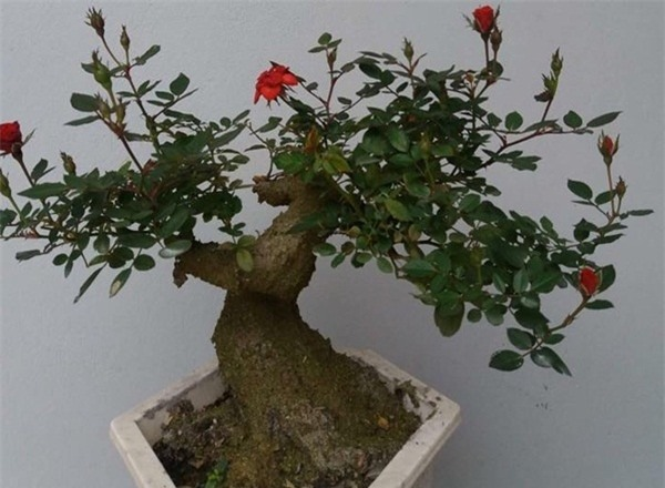 Rộ mốt chơi hoa hồng giả cổ ngày Tết vừa rẻ vừa đẹp