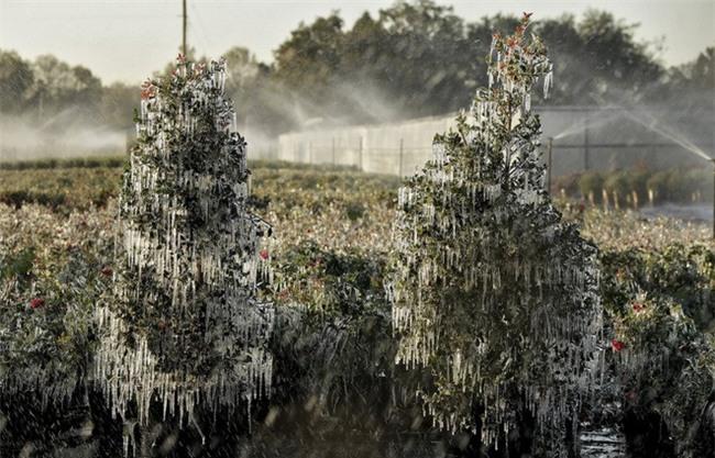 Bom bão tuyết khiến Mỹ lạnh thứ hai hành tinh, mùa đông ở Bắc Cực chưa là gì! - Ảnh 6.