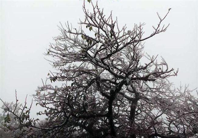 Dự báo thời tiết,bản tin thời tiết,tin thời tiết,thời tiết Hà Nội,băng tuyết