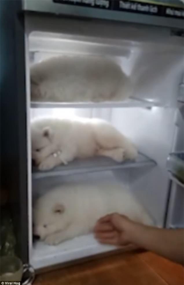 Clip thanh niên Việt Nam cho 3 chú chó con vào tủ lạnh tránh nóng lên báo nước ngoài - Ảnh 2.